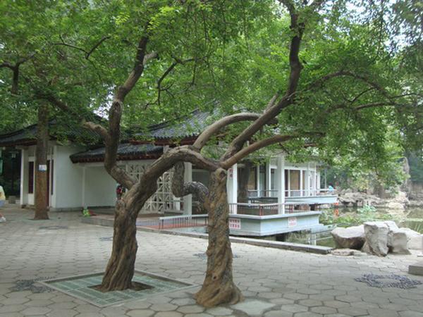 塑树景观新万博竞彩app苹果下载